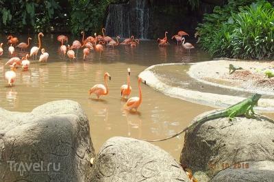 Сингапур. Парк птиц
